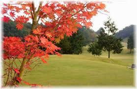 秋のゴルフ」